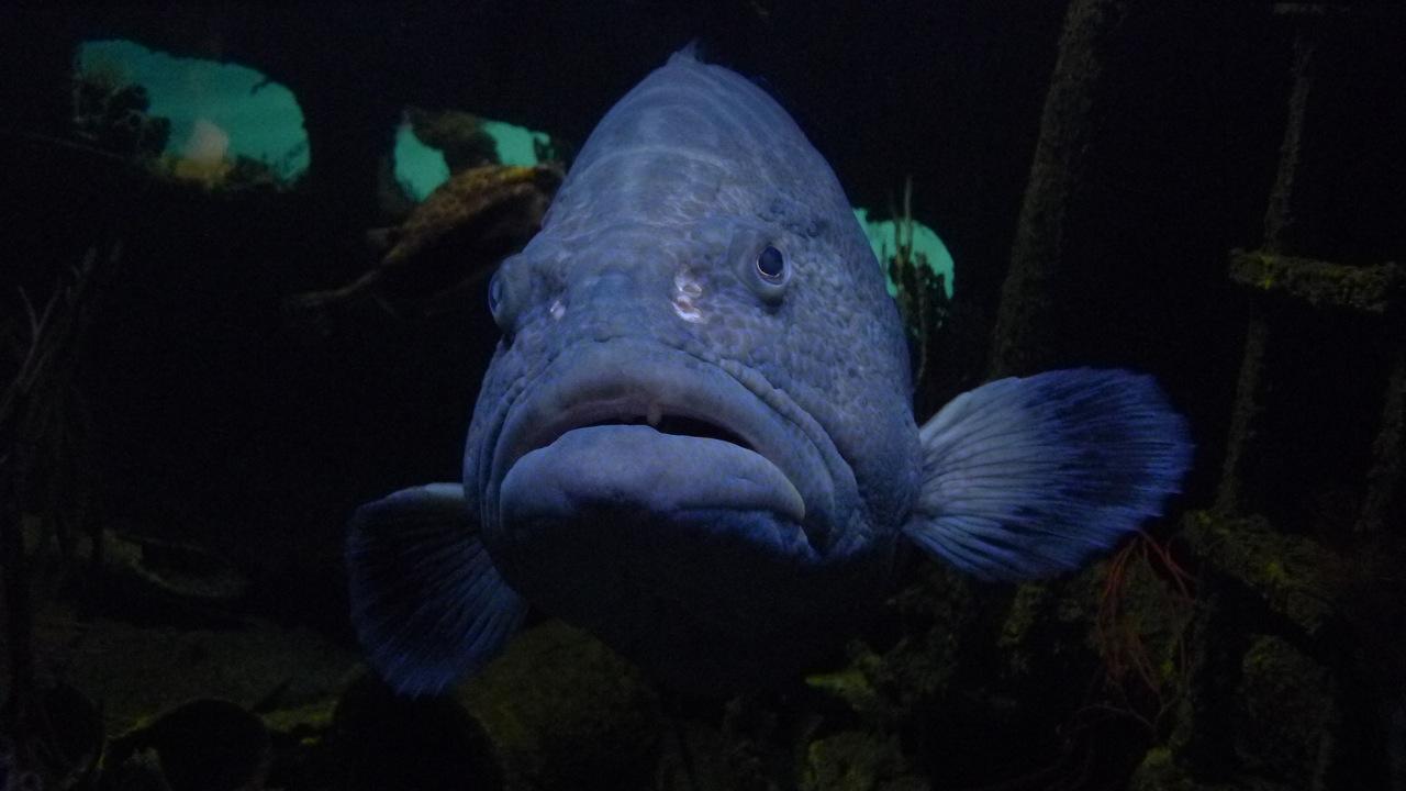 Baltimore aquarium restaurant adventure healthfully Aquarium in baltimore